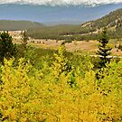 Colorado &quot;gold&quot; by Nancy Richard