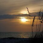 Sunset through sea oats by Ben Waggoner