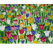 Tulips as far as you can see Photographic Print