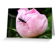 Coleoptera : Beetle Greeting Card