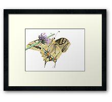 Papilionidae Framed Print
