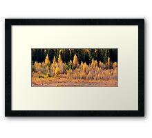 Autumn bushes Framed Print