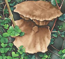 Woodland Mushrooms - Aquamarkers. by Gee Massam