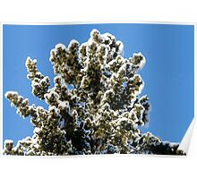 Frost  Laced Tree Poster