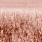 Just Grasses by Pixelbloke