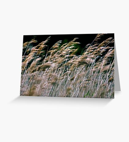 Reeds At Salthouse Marsh Greeting Card
