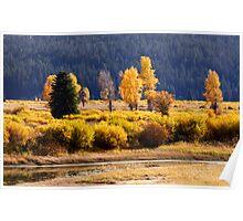 Beautiful landscape of Aspens Poster