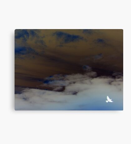hope (clouded sky, white bird flying free) Canvas Print