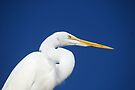 Great Egret by Ben Waggoner