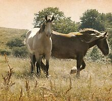 wild horses by alinecaldwell