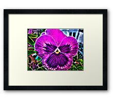 What a Pansy Framed Print
