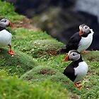 Atlantic Puffins - Sumburgh Head - Shetland by WillH