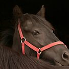 The Pony in Red by Fleur Hallam