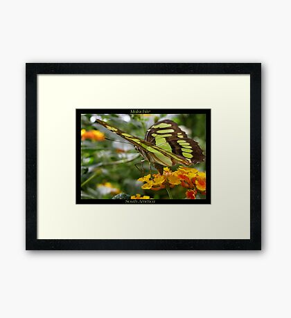 Butterfly (South America) ~ Malachite II Framed Print