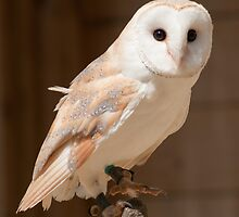 Barn Owl by Cliff Williams