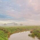 Swans on the River Brue at Sunrise, Glastonbury by Robin Whalley