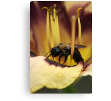 Bee on Lily Canvas Print