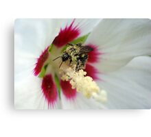Pollen Overdose Canvas Print