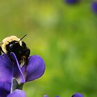 One-Winged Bumble by Sara Bawtinheimer