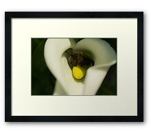 Bee on Cala Lily Framed Print