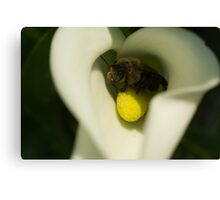 Bee on Cala Lily Canvas Print