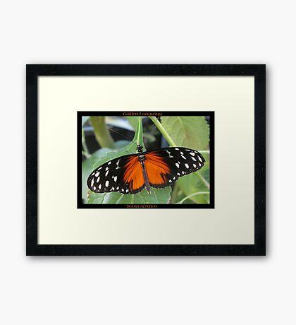 Butterfly (South America) ~ Golden Longwing II Framed Print