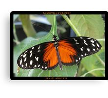 Butterfly (South America) ~ Golden Longwing II Canvas Print