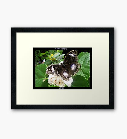 Butterfly (Asia) ~ Great Eggfly Framed Print