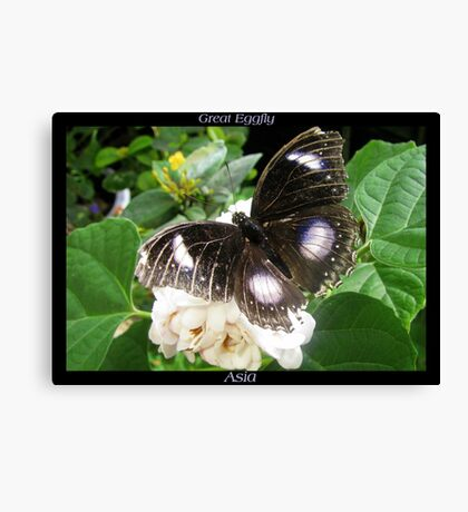 Butterfly (Asia) ~ Great Eggfly Canvas Print