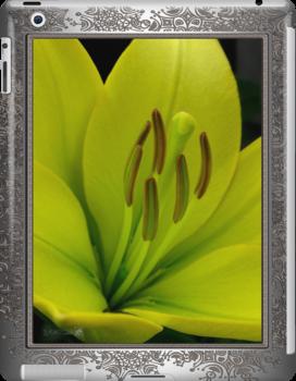 Hybrid Lily named Trebbiano by JMcCombie