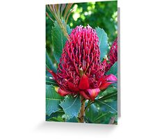 Party's nearly over - Waratah, Telopea speciosissima Greeting Card