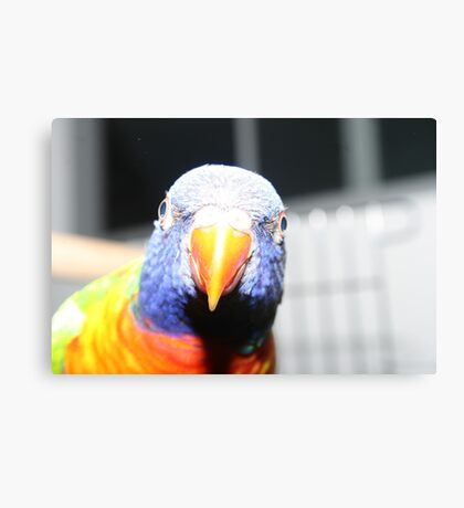 Max the Parrot - Sydney, Australia Canvas Print