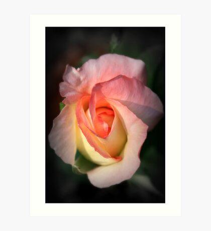 Heart of a Rose Art Print