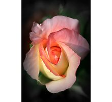 Heart of a Rose Photographic Print
