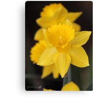 Daffodil named Exception Canvas Print
