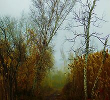 Fog On The Trail by Funmilayo Nyree