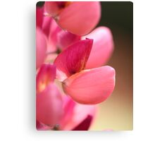 Lupine named Gallery Red Canvas Print