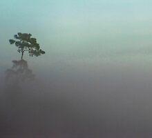 Foggy Tree by Joe Manno
