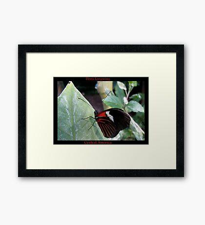 Butterfly (Central America) ~ Doris Longwing Framed Print