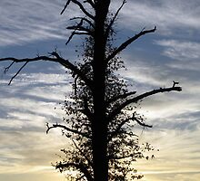 Lone Star Tree by tmarie1