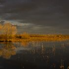 Golden Hour at the Bosque II by Mitchell Tillison