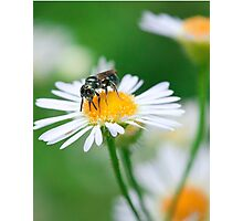 Insect Buffet Photographic Print