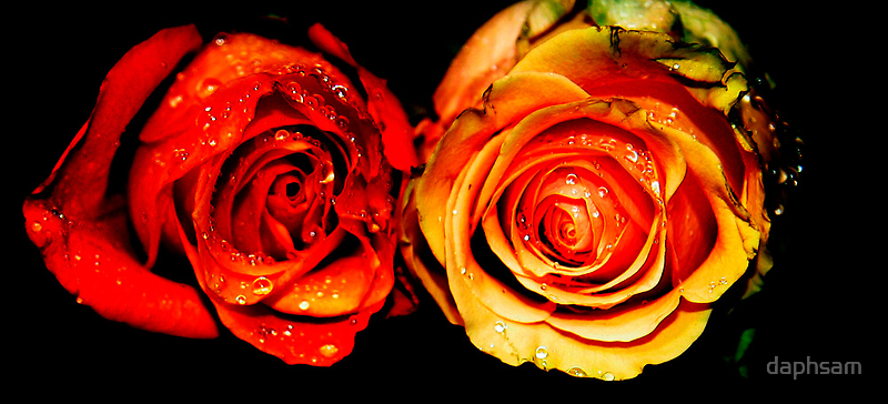 Forgotten Roses by daphsam