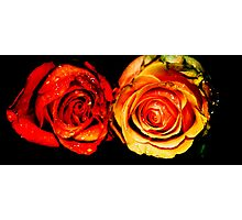 Forgotten Roses Photographic Print