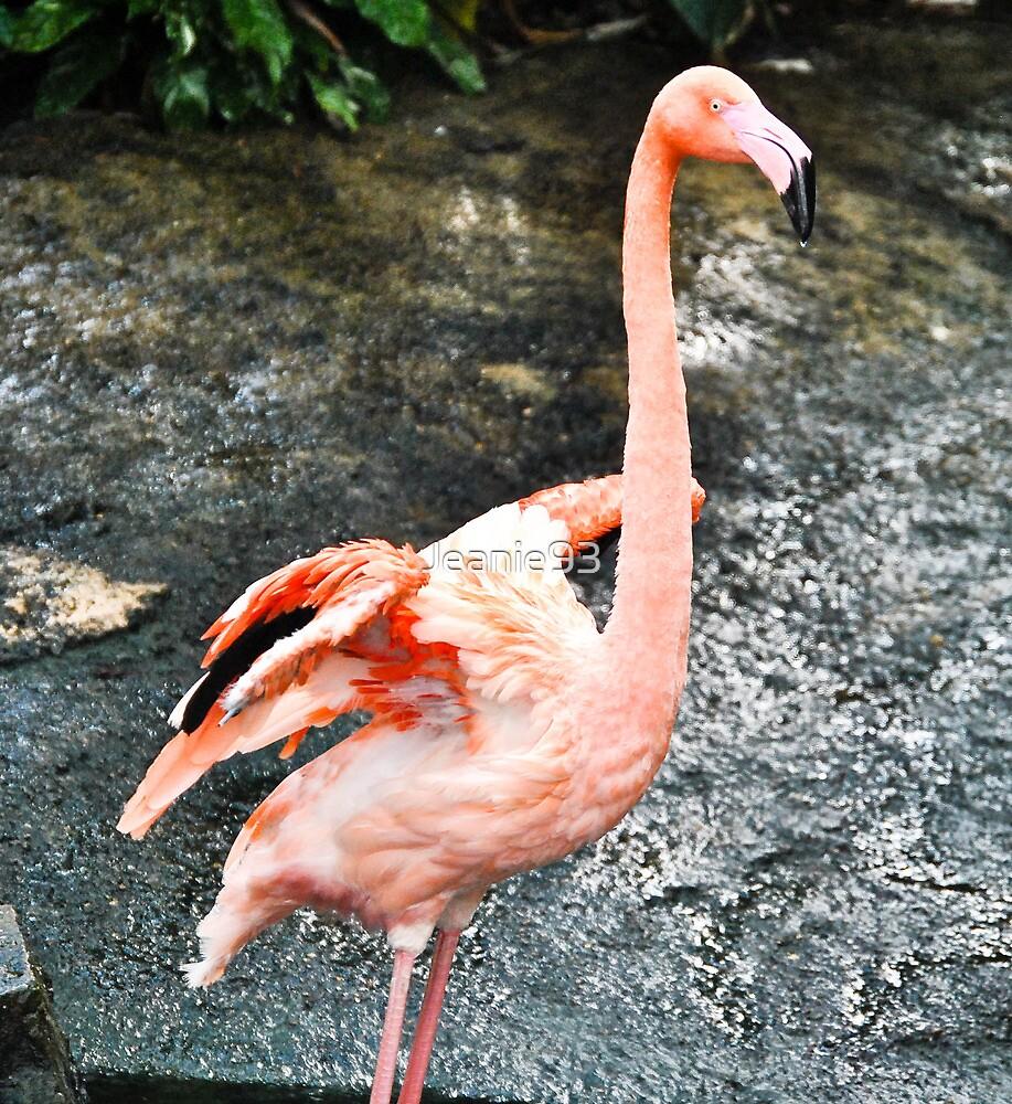 Flamingo 2 by Jeanie93