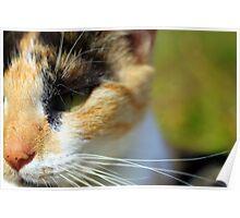 Feline nose Poster