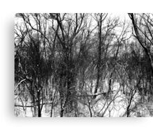 Black and White Branches Canvas Print