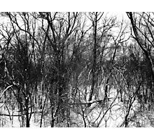 Black and White Branches Photographic Print