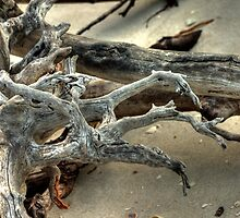 Driftwood by Virginia N. Fred