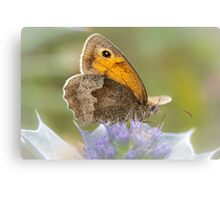 Meadow Brown on Sea Holly Canvas Print
